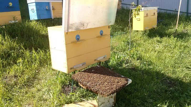 Всесвітній день бджіл