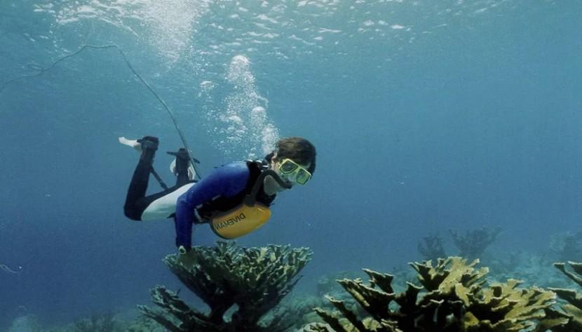 exolung апарат для підводного дихання